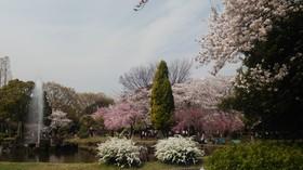 大江川緑地.JPG